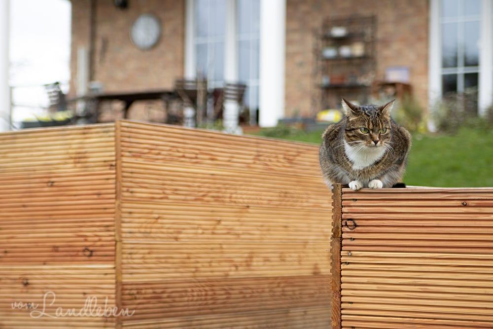 Katze auf dem Hochbeet