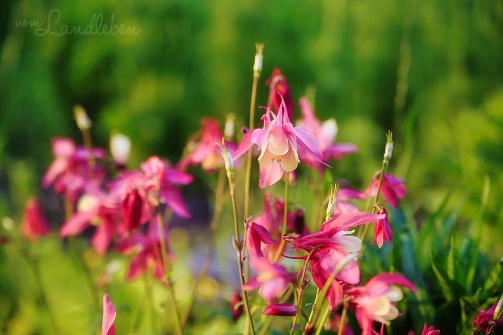 Luminar im Test - Bildbearbeitung Blumen