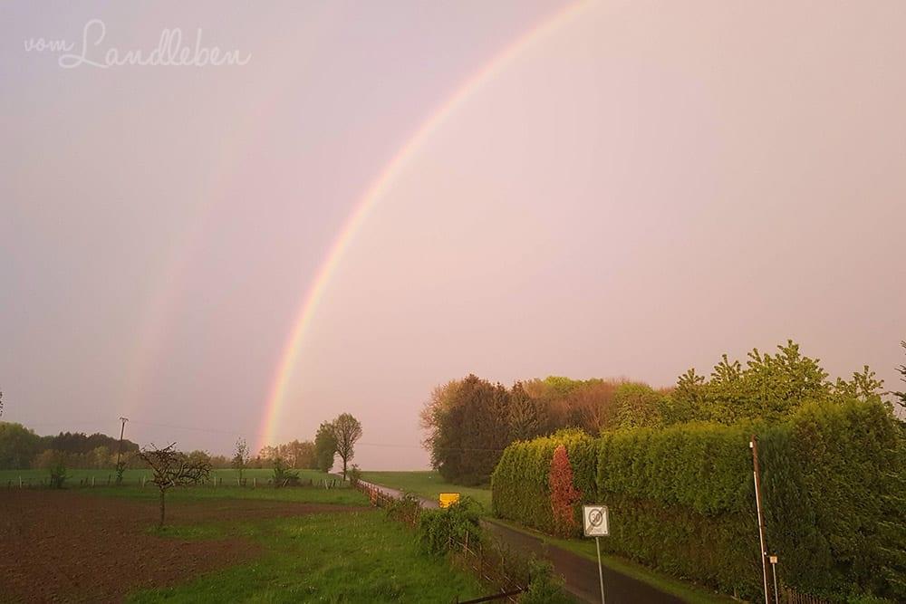 Luminar im Test - Bildbearbeitung Regenbogen