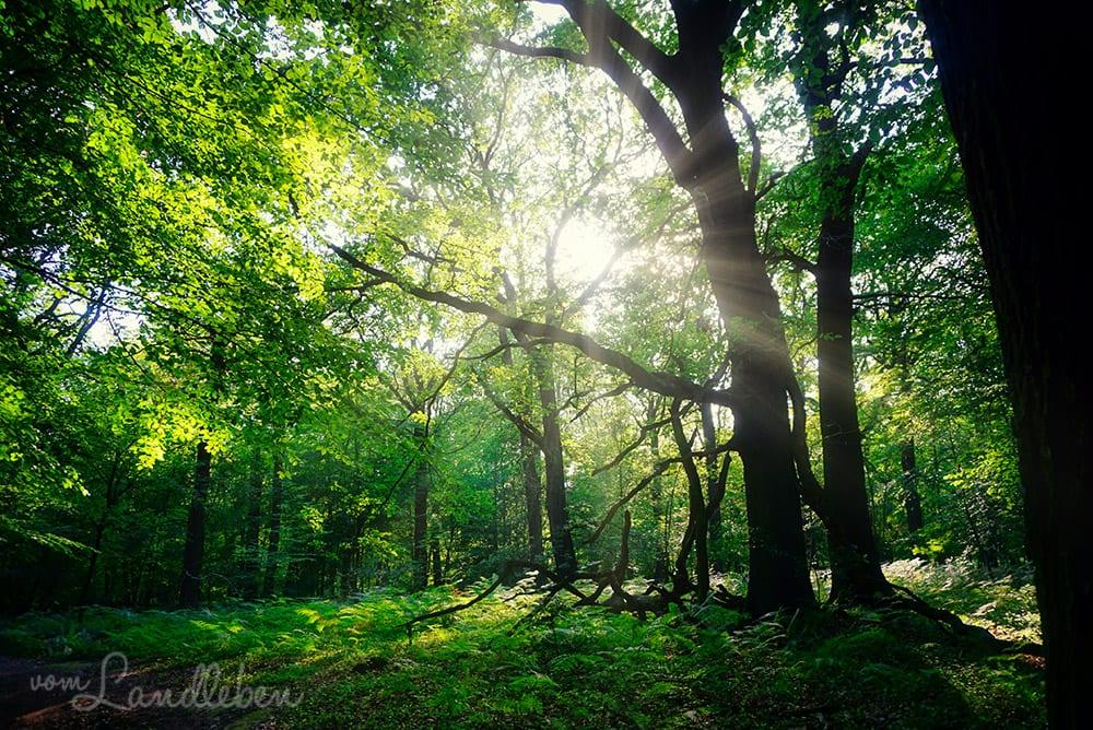 Luminar im Test - Bildbearbeitung Wald