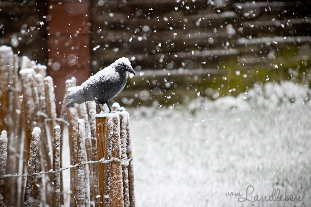 Schnee im Februar 2020