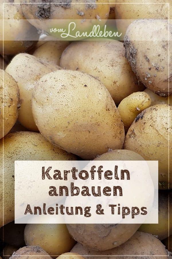 Kartoffeln selber anbauen: die komplette Anleitung und meine Tipps