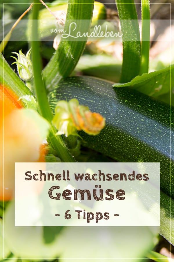 Schnell wachsendes Gemüse - 6 Tipps