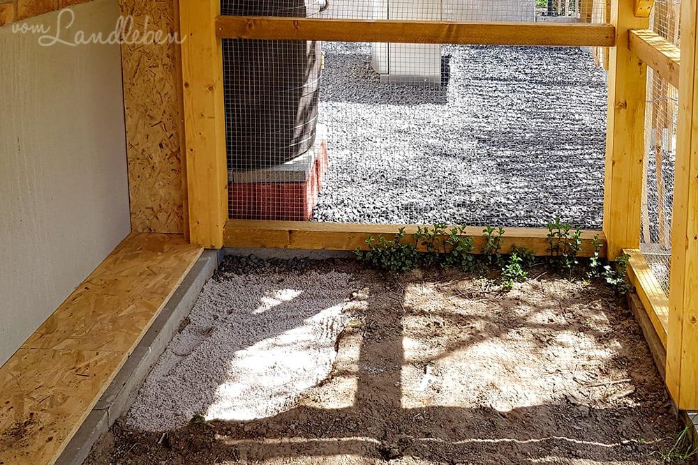 Sandbad für die Hühner in der Voliere