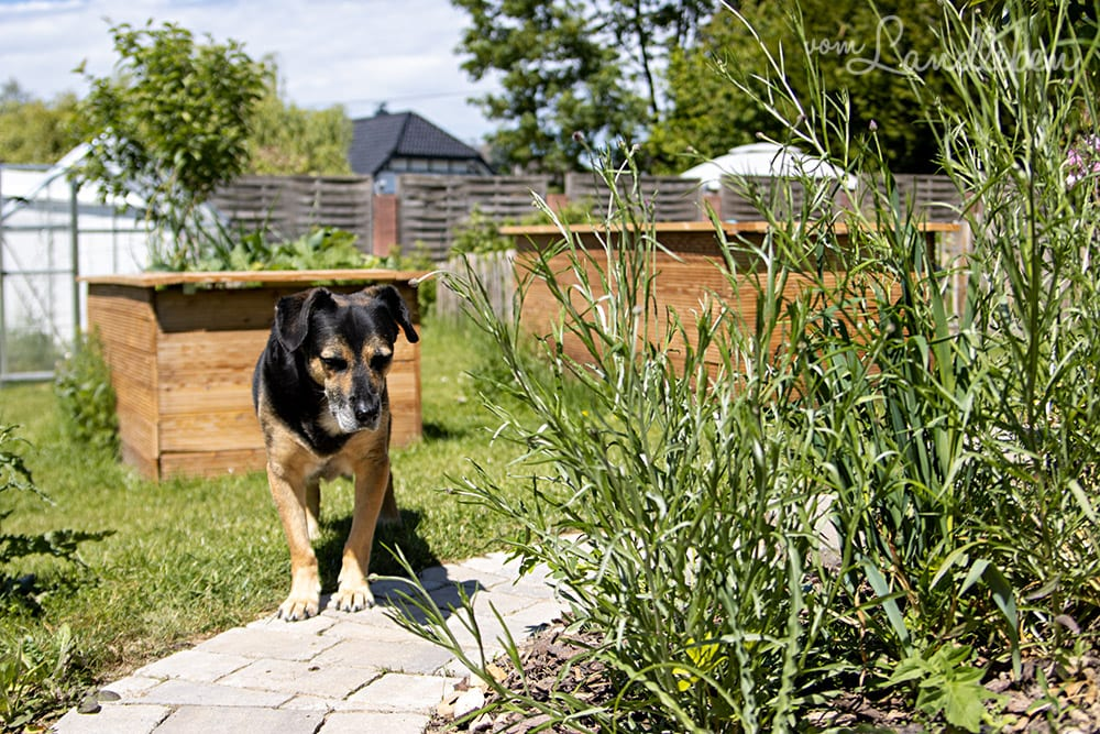 Nala im Garten