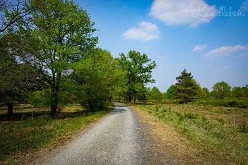 Wandern in der Wahner Heide