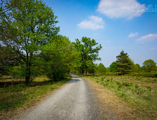 Wandern in der Wahner Heide: die Geisterbusch-Tour