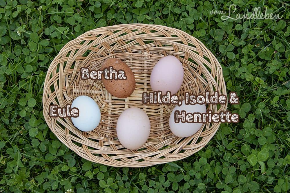 Die Eier von unseren Hühnern