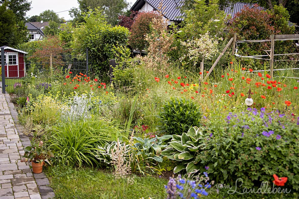Mittelgarten im Juni 2020