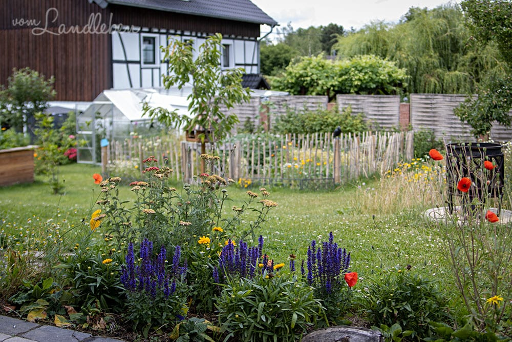 Hinten im Garten - Juni 2020