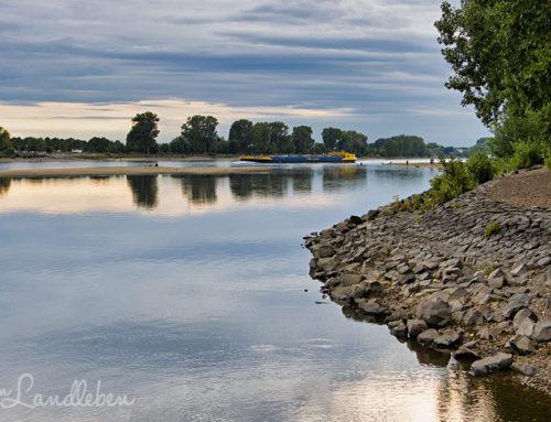 Wo die Sieg in den Rhein mündet…