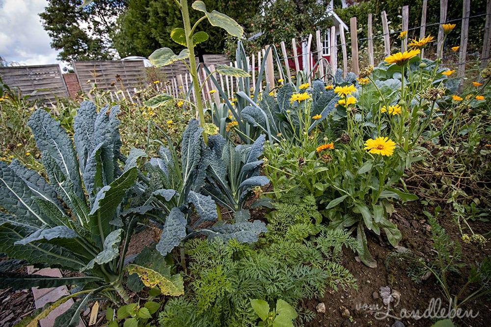 Bauerngarten im August 2020
