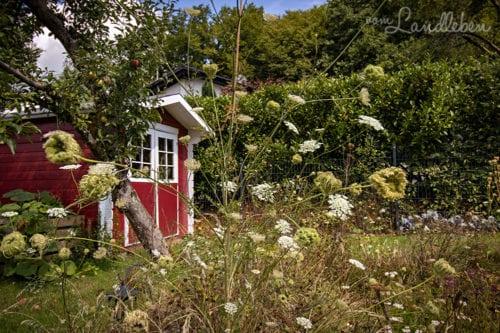 Unser Garten im August 2020