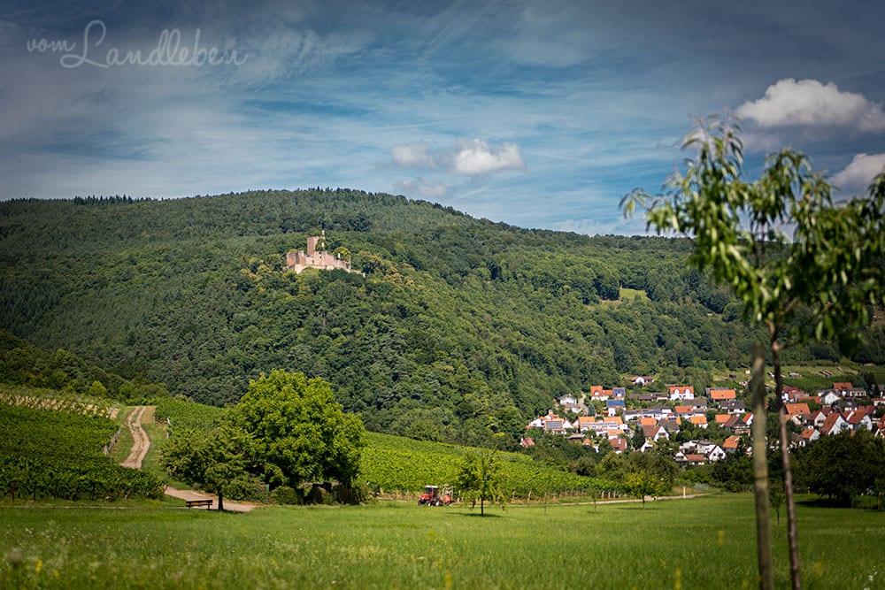 Blick auf Burg Landeck und Klingenmünster