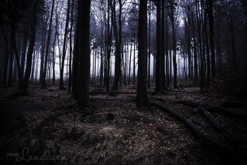 Nebel im Wald - Taunus