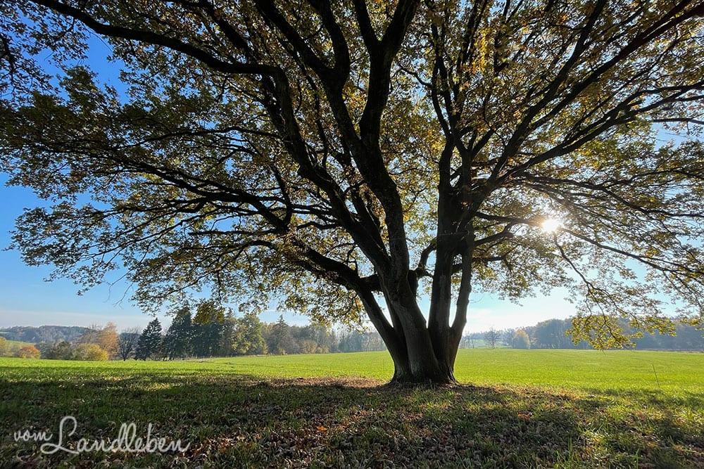 Fotos mit dem iPhone 12 Pro - Baum