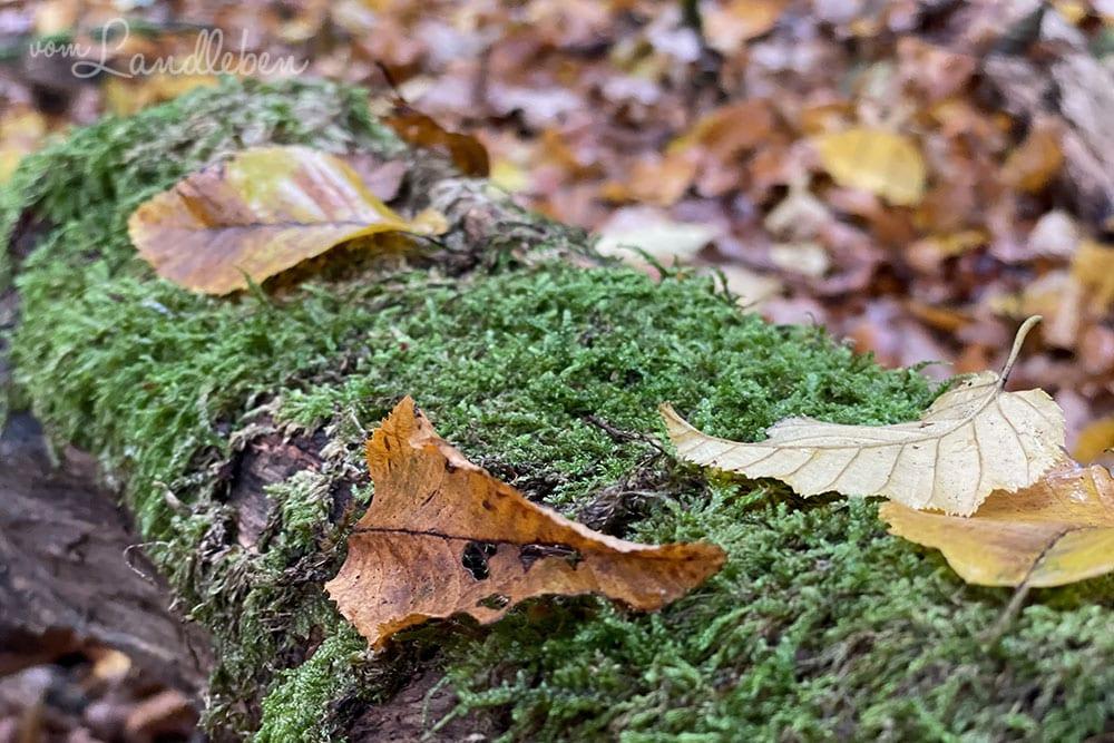 Fotos mit dem iPhone 12 Pro - Herbst