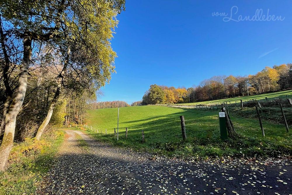 Fotos mit dem iPhone 12 Pro - Herbstlandschaft