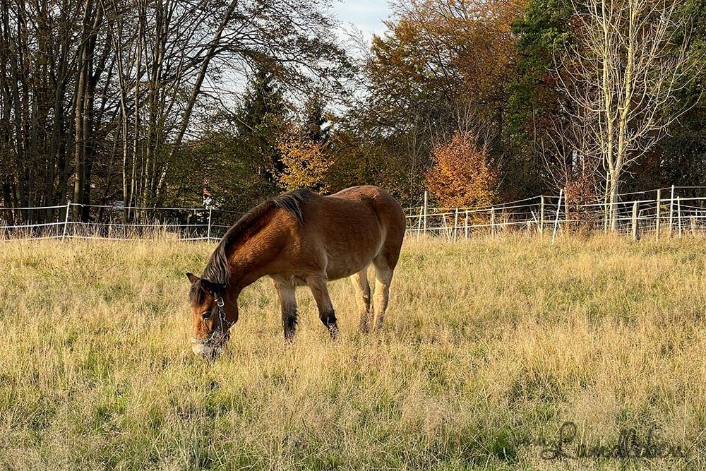 Fotos mit dem iPhone 12 Pro - Pferd