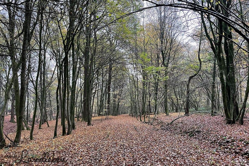 Fotos mit dem iPhone 12 Pro - Wald
