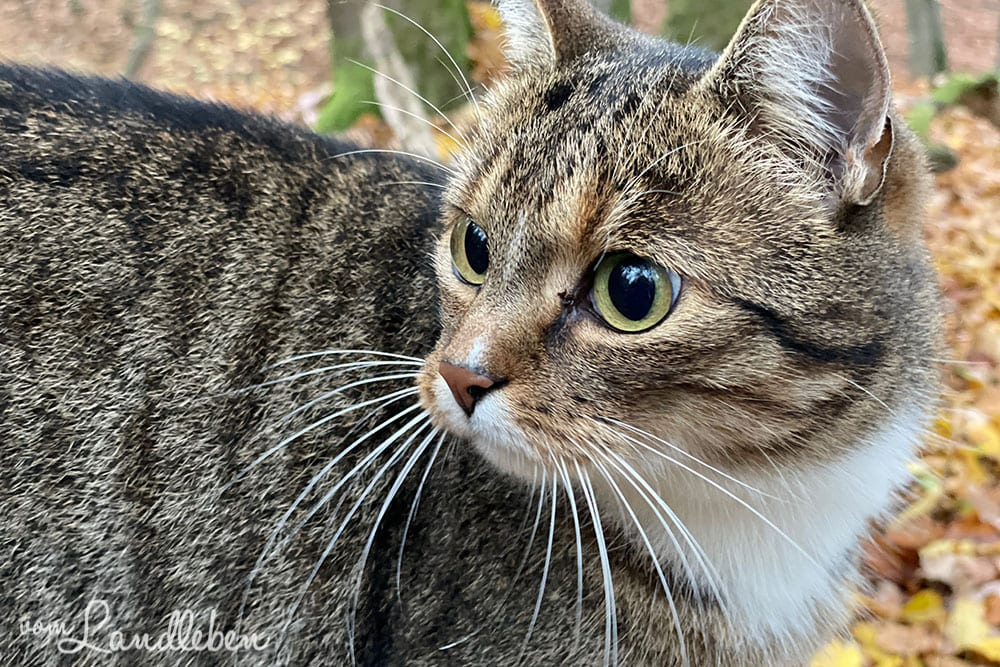 Fotos mit dem iPhone 12 Pro - Katze