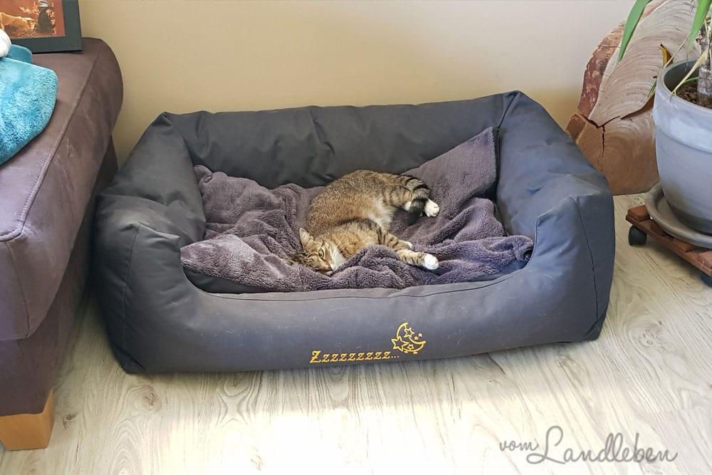 Die Katze im Hundebett
