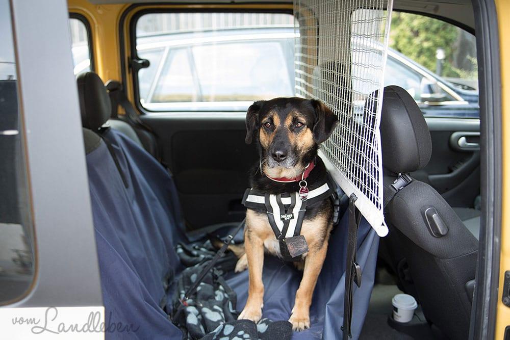 Verreisen mit Hund - Anschnallen im Auto