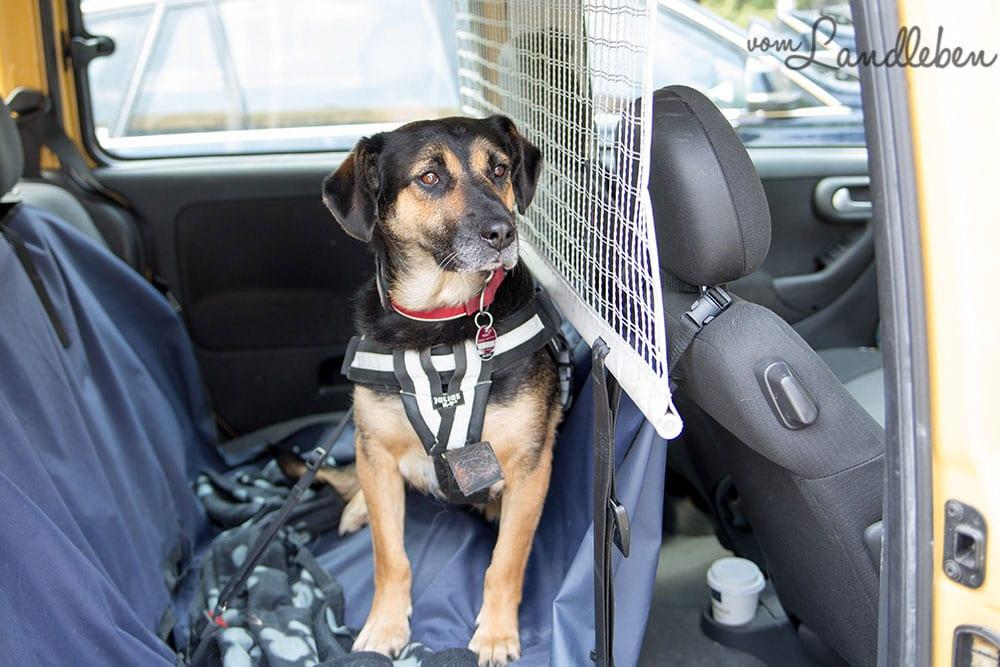 Verreisen mit Hund im Auto