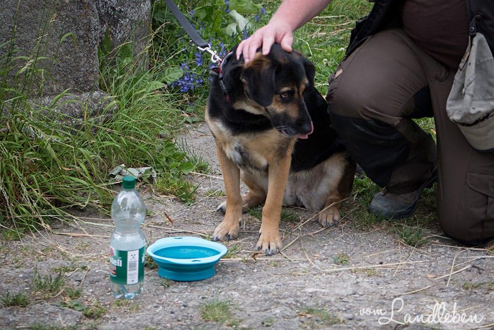 Verreisen mit Hund - Wasser für unterwegs