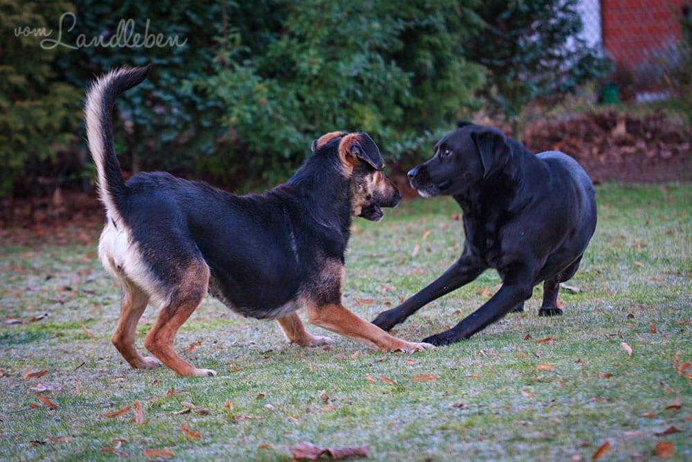 Nala und Cora im Januar 2013