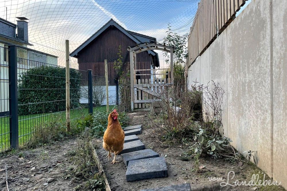 Weg im Hühnergarten