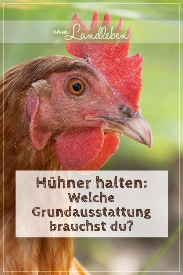 Hühner halten: welche Grundausstattung brauchst du?