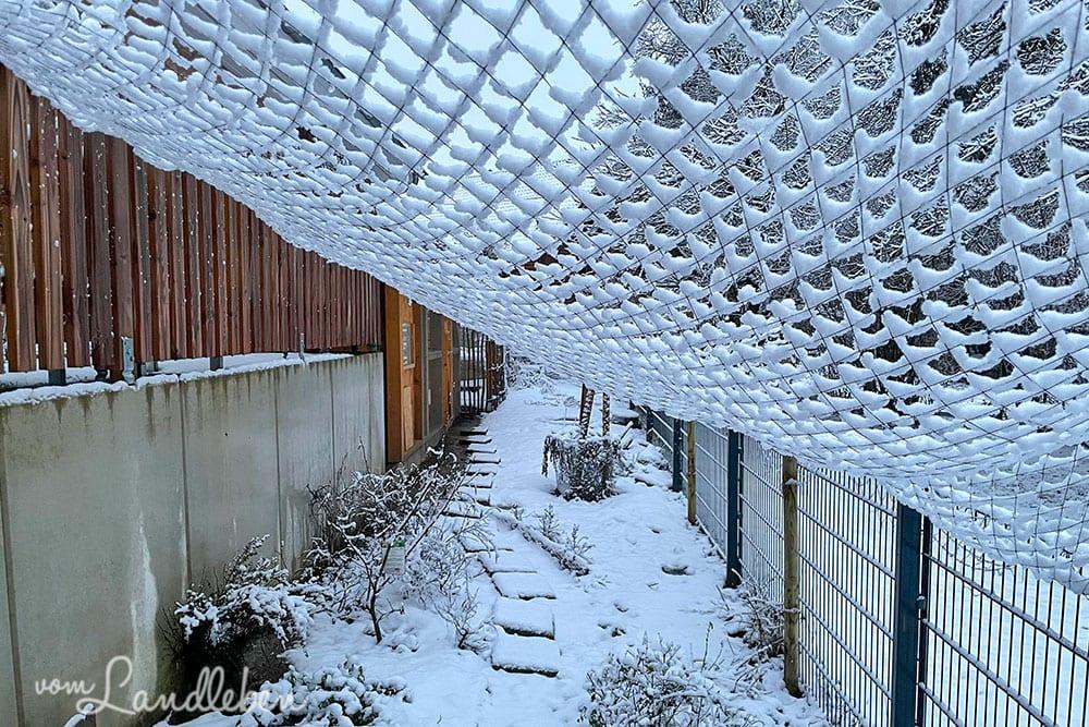 Schnee im Hühnergarten - Januar 2021