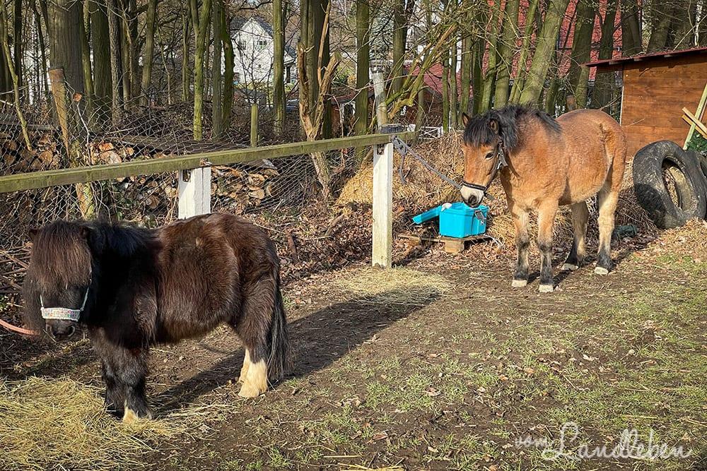 Bei den Ponys