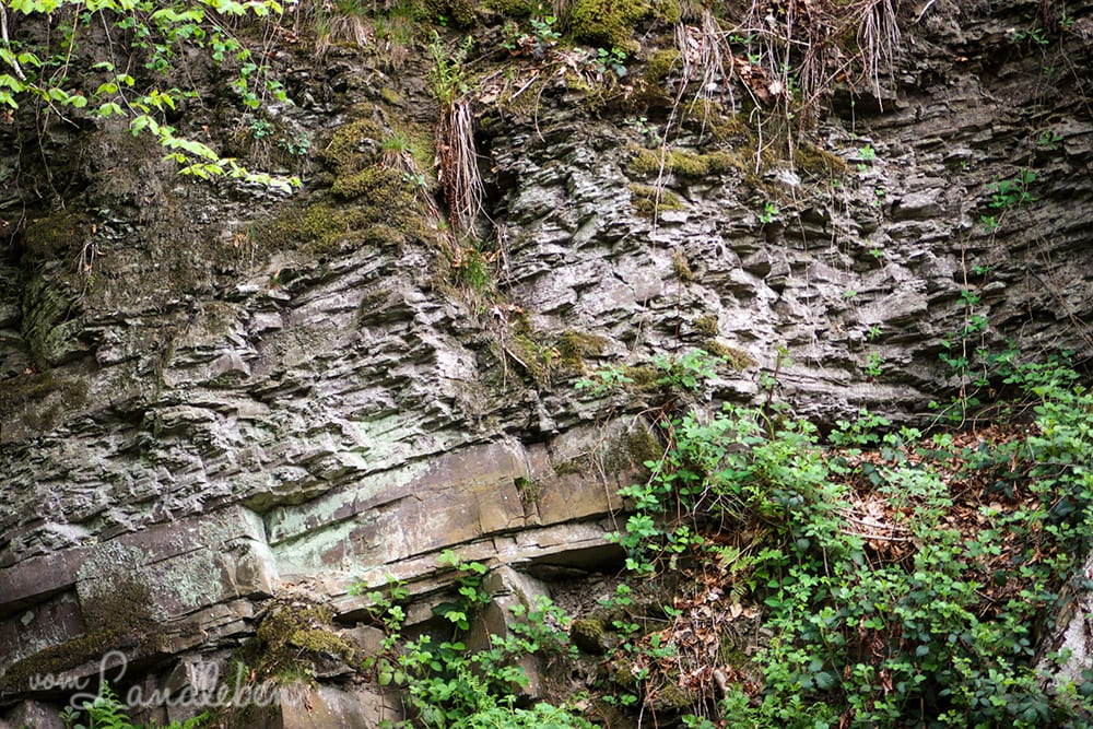 Alter Steinbruch im Wenigerbachtal bei Seelscheid