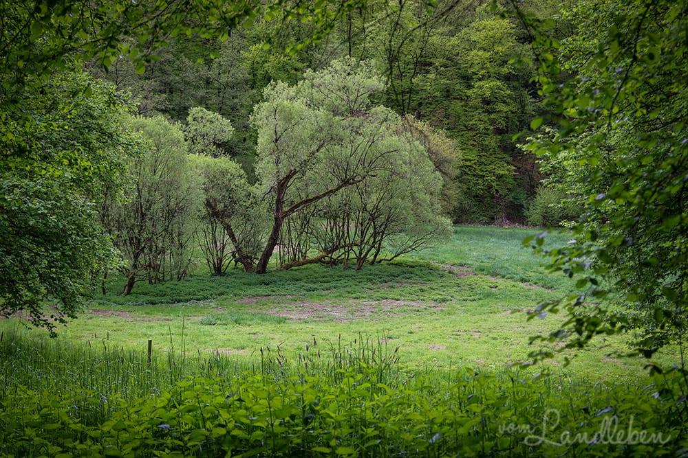 Wenigerbachtal bei Seelscheid