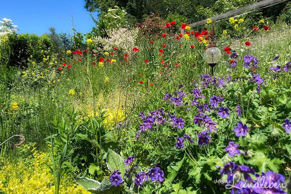 Unser Garten im Juni 2021