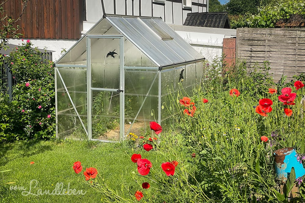Garten im Juni 2021