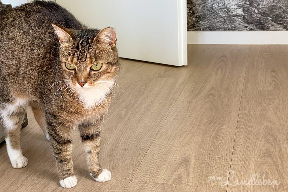 Unsere Katze Juli