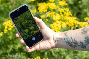 Apps zur Pflanzenbestimmung
